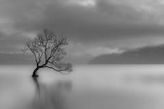 sam drzewo fotografia stock