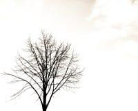 sam drzewo Fotografia Royalty Free