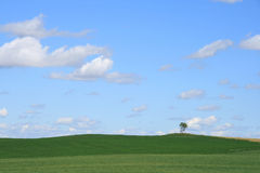 sam drzewo krajobrazu obraz royalty free