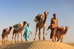 De mens van de kameel leidt zijn kamelen over de woestijn van Thar Stock Foto's