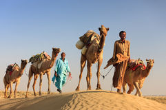 Camel man leads his camels across the Thar desert Stock Photos
