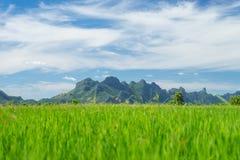 Sam Roi Yod mountain with rice field Stock Photos