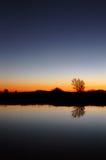 sam sunset drzewo Obrazy Royalty Free