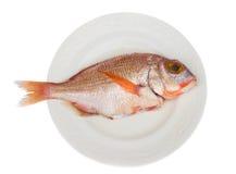 鱼sama 图库摄影