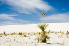 sama pustyni obrazy stock