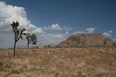 sama pustyni Obrazy Royalty Free