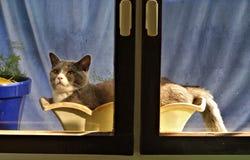 Samael o gato como a planta no vaso de flores Fotografia de Stock Royalty Free
