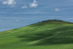 Samall Hill. Small Hill of corn in Tuscany Stock Image