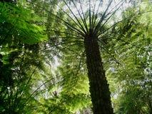 Samambaia de árvore do campo imagens de stock