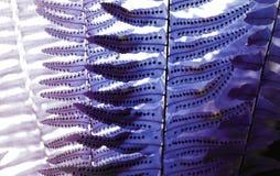 A samambaia deixa a textura da semente com a luz solar do ver?o Floresta ex?tica ilustração royalty free
