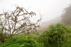 Samambaia e árvore em um líquene na névoa densa Foto de Stock Royalty Free