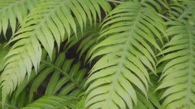 Samambaia em uma floresta encantado mágica do tropica vídeos de arquivo