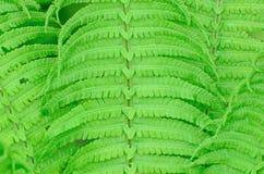 A samambaia molhada verde sae do fundo Fotos de Stock