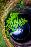 Samambaia no poço de água Fotos de Stock
