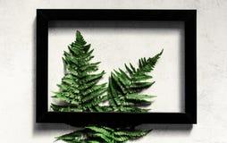 Samambaia quadro de madeira fotografia de stock royalty free