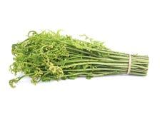 Samambaia vegetal esculentum ou comestível de Diplazium fresco no fundo branco encontrado em Ásia e em Oceania fotos de stock