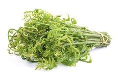 Samambaia vegetal esculentum ou comestível de Diplazium fresco no fundo branco encontrado em Ásia e em Oceania imagem de stock