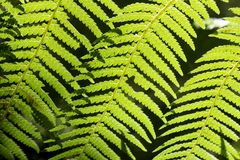 Samambaias bonitas na floresta e na luz do sol Austrália agradável fotos de stock royalty free