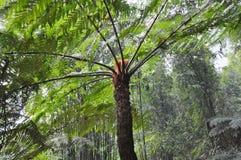Samambaias de árvore na porcelana Fotos de Stock Royalty Free