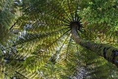 Samambaias de árvore na porcelana imagem de stock