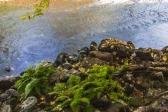 Samambaias do rio de Merced do vale de Yosemite imagem de stock