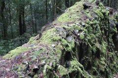 Samambaias e musgo no pinheiro ca?do foto de stock
