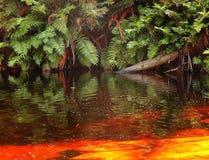 Samambaias em um rio dourado Imagens de Stock Royalty Free