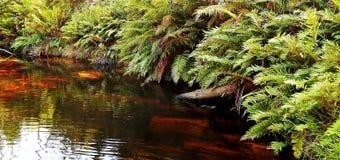 Samambaias em um rio dourado Foto de Stock