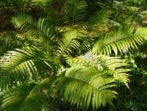Samambaias na floresta imagem de stock