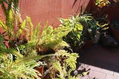Samambaias, plantas Fotografia de Stock