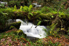 Samambaias que crescem no log falled, com água movente atrás Imagem de Stock Royalty Free