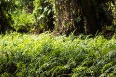 Samambaias verdes na floresta fotos de stock