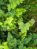 Samambaias verdes no berçário Fotografia de Stock Royalty Free