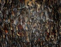 Saman tree. Bark of  saman tree a backgrounds Royalty Free Stock Photography