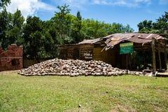 Samana Dominikanska republiken, 10 april, 2019 //kokosnötlantgård i Dominikanska republiken: berg av kokosnötter på gräsmattan fotografering för bildbyråer