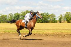 Samara, août 2018 : Course de chevaux au festival équestre photographie stock libre de droits