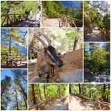 Samaria峡谷图象在中央克利特,希腊 库存图片