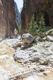 Samaria峡谷的铁门 免版税库存图片