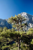 Samaria Gorge Royalty Free Stock Photo