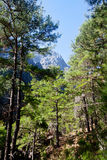 Samaria Gorge Canyon, Crete, Greece royalty free stock photography