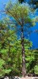 Samaria Gorge, Eiland Kreta, Griekenland Royalty-vrije Stock Afbeelding