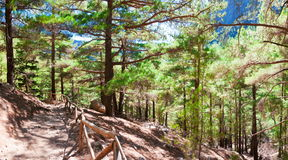 Samaria Gorge, Eiland Kreta, Griekenland Stock Foto's