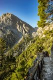 Samaria gorge forest in mountains pine fir trees green landscape background stock image