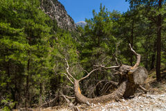 Samaria Gorge. Stock Photo