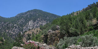 Samaria national reserve Royalty Free Stock Image