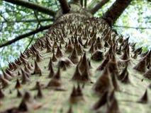 samauma结构树 免版税库存照片
