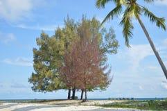 Samber Gelap wyspa, Kotabaru, Południowy Borneo, Indonezja Fotografia Stock