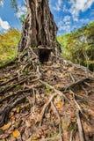 Sambor Prei Kuk świątynne ruiny, Kambodża Zdjęcia Stock