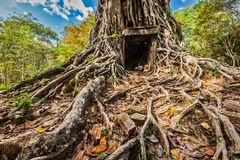 Sambor Prei Kuk temple ruins, Cambodia Royalty Free Stock Image