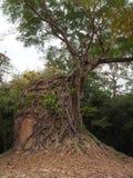 Sambor Prei Kuk w Kambodża Obrazy Stock